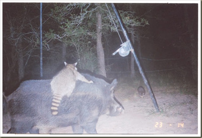 game-cam-coon