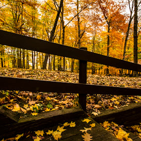 Burchfield park in fall.. by Rajeev Krishnan - City,  Street & Park  City Parks ( fall colors, park, autumn, fall, trail, state park, , path, nature, landscape )