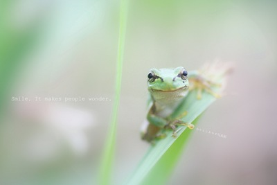 smile by cana_m on Flickr