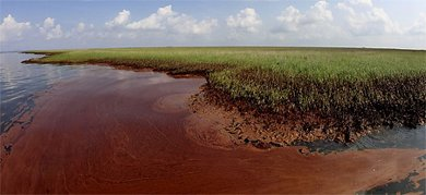 Oil-soaked wetland