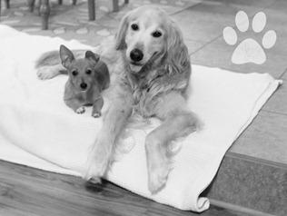 Daisy &Lavette