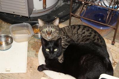 Darth and General_20110331_002