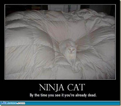 ninja-cat