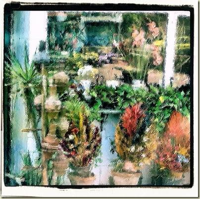 cairoflowers