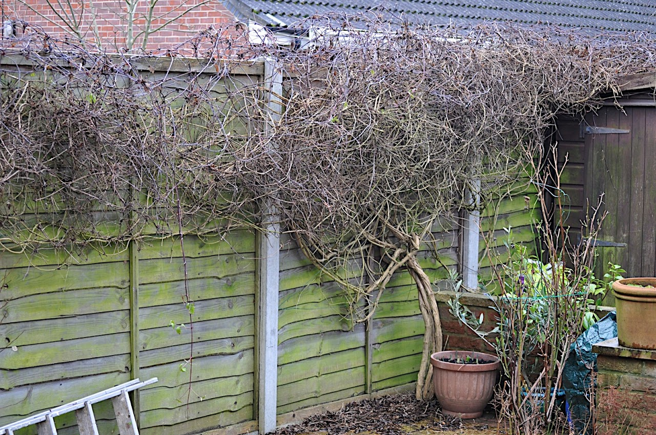 When To Use Pruning Paint