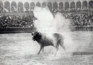 Toro Manso 001