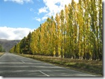Fall colors on the South Island