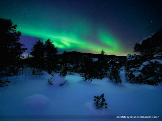 2 -Aurora in the Woods by Arild Heitmann6