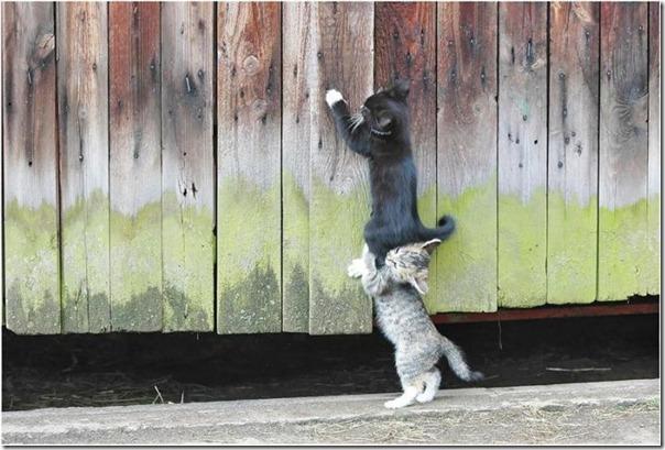 gatos divertidos patatitasylimones (21)