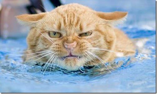 gatos divertidos patatitasylimones (4)