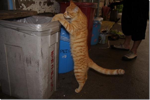 gatos divertidos patatitasylimones (14)