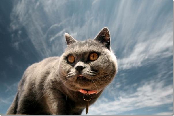 gatos divertidos patatitasylimones (20)