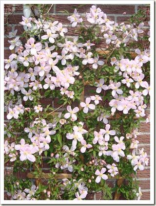 tuin april 2011 008