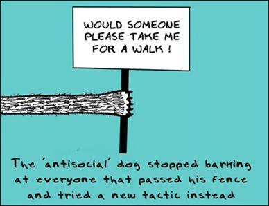 Antisocial Dog