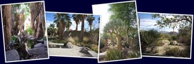 View The Living Desert - Gardens