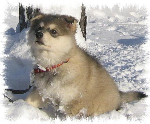 ByuTi  i snøen