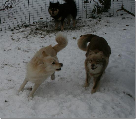 tre hunder i lek