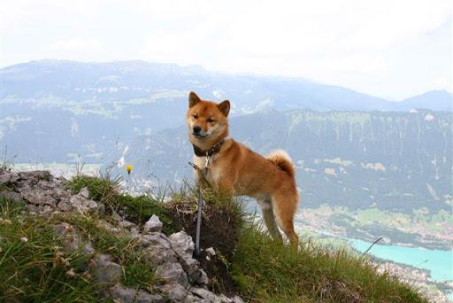 Mere Bjergtur i Schweiz