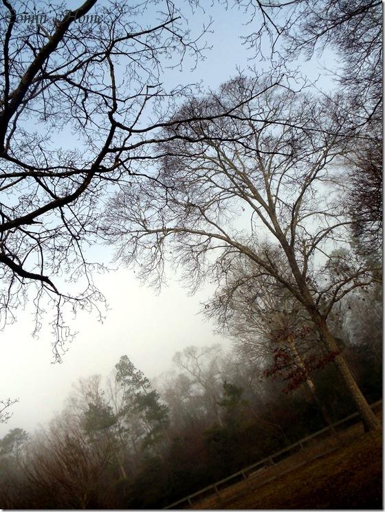 Blue sky on a Foggy Day