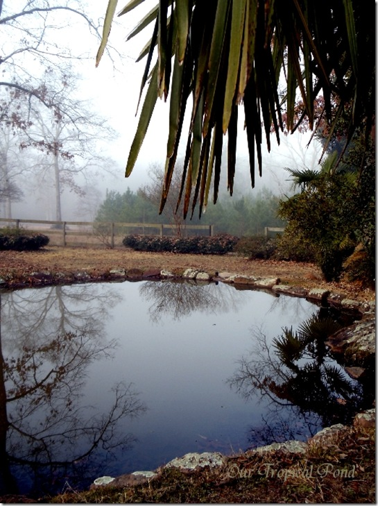 tropical pond in winter