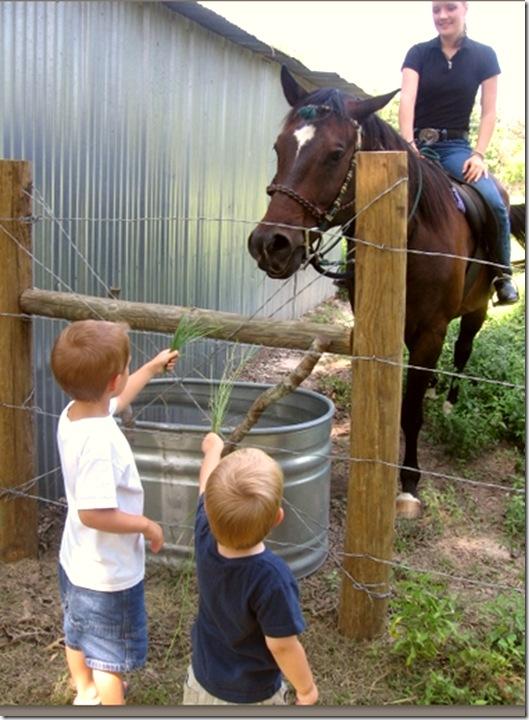 feed the horses