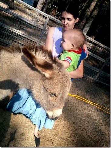 Nikolai likes the donkey