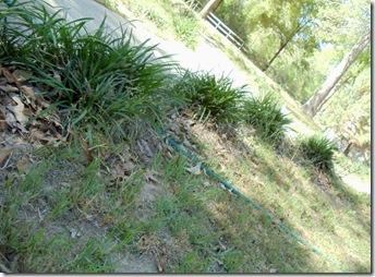 sidewalk bushes
