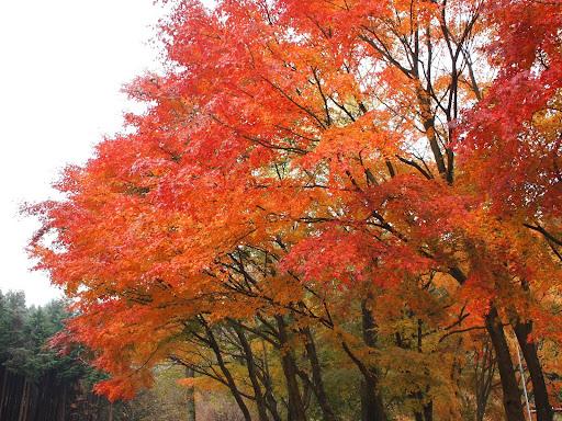 [写真]清山荘(2)