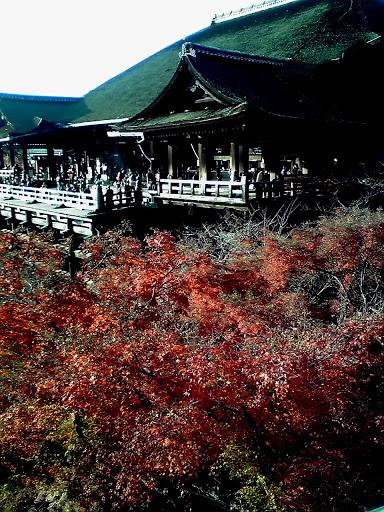 向かいからの清水の舞台と紅葉の写真