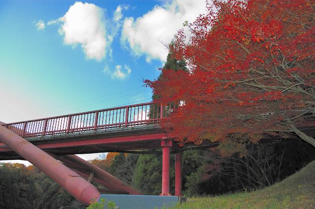紅葉と赤い王滝湖かけ橋の写真