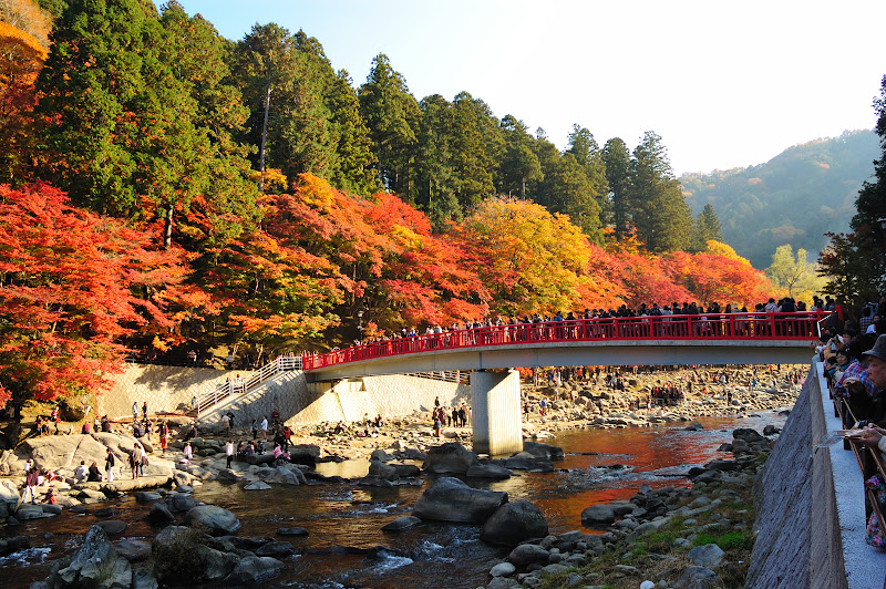 香嵐渓の待月橋と紅葉の写真