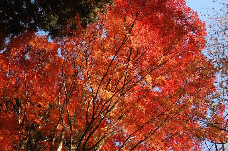 香嵐渓・飯盛山山頂近辺の紅葉の写真