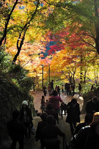 香積寺・香嵐渓の紅葉の写真