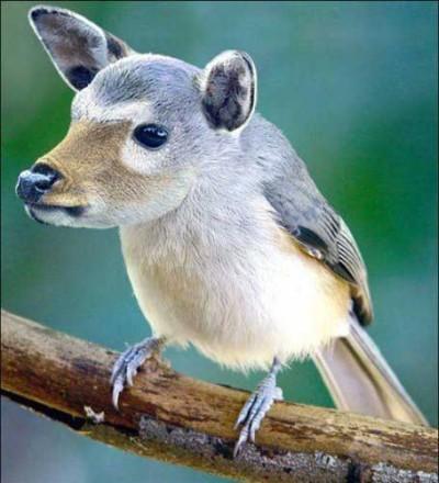 Что за птица, что за зверь?