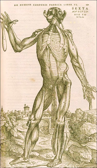 Andreas Vesalius (1514-1564) (anatomist) Stephen van Calcar and the Workshop of Titian (artists) Basel, 1543. Woodcut.