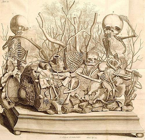 Frederik Ruysch (1638-1731) (anatomist); Amsterdam, 1744. Etching with engraving