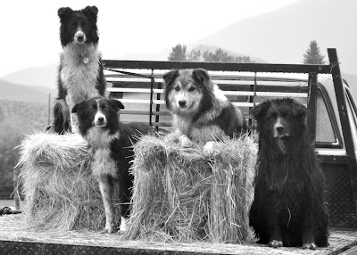 Four ranch dogs and their truck