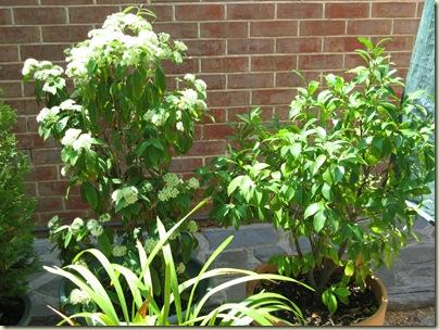Garden Wrap 026