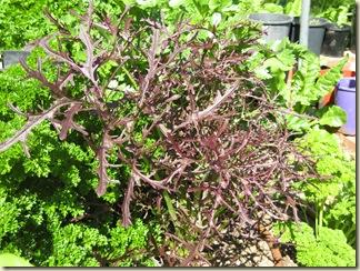 Garden Purple 001