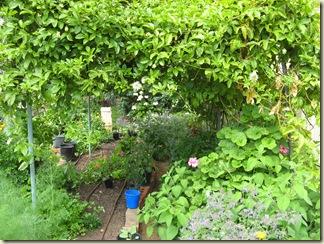 Garden & Dandelion 015