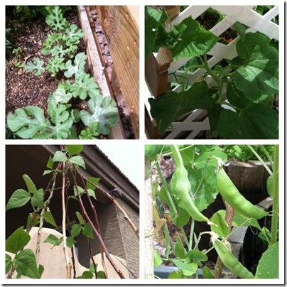 garden as of april 2011 b
