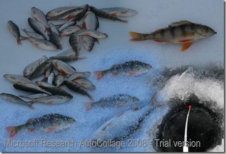 WinterFishCollage