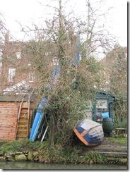 IMG_0002 a canoe tree