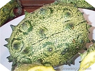 Horned African Melon Single Small