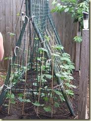 Michael's Garden 016