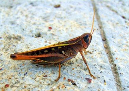 insectbyphaedrus42