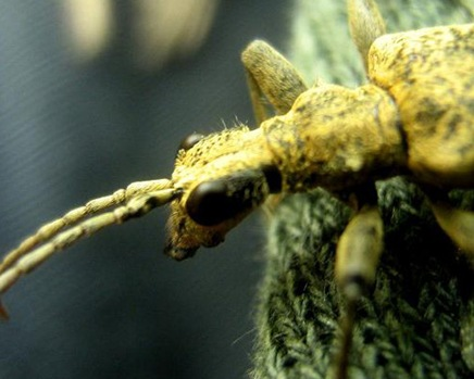 insectbyfocklove