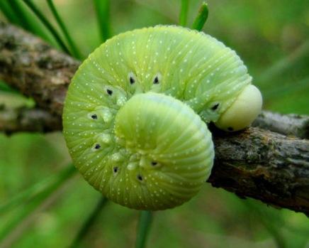 greeninsectbyjaszczura