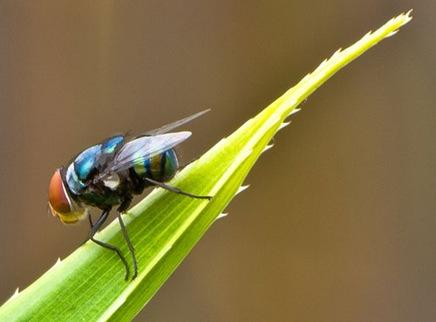 insectmacro1081214