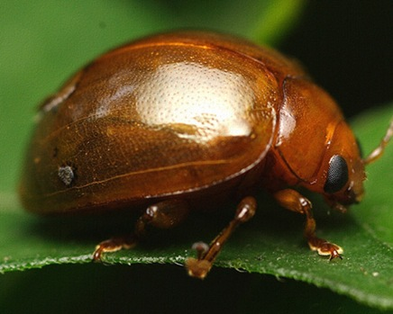 insectphoto3set3